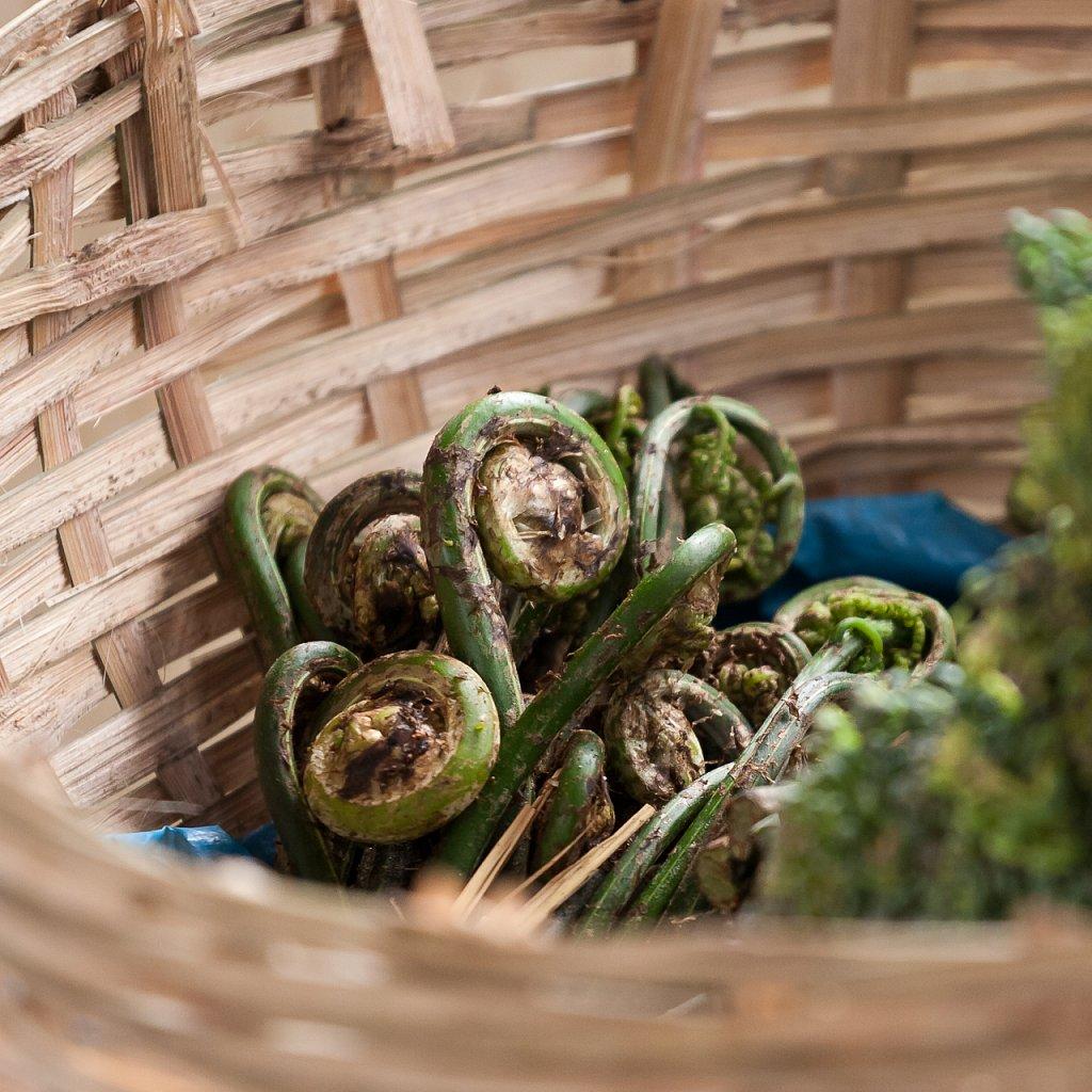 Essbarer Farn ∙ Edible Fern