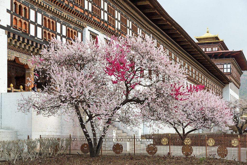 Thimpu Dzong, Bhutan