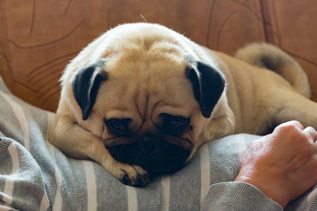 Ein Hundeleben ∙ A Dog's Life