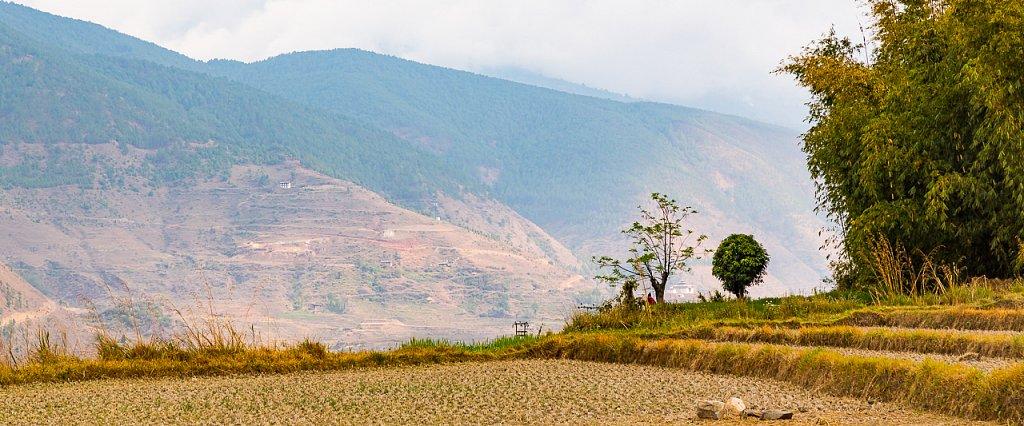 Nahe ∙ near Chime Lhakhang, Bhutan